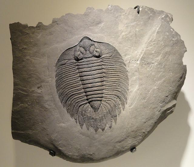 arctinurus-boltoni-883871_640